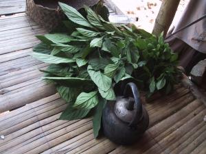 Akha Indigo Plant