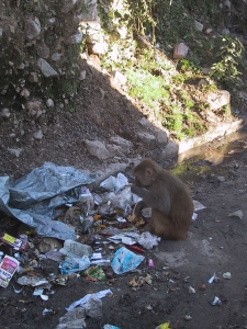 Monkey Trash