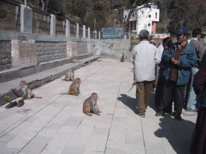 Monkeys Begging