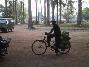 Cambodian Man Transporting Coconuts By Bicycle