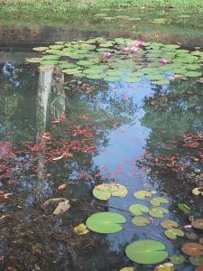 Banteay Srei Pond
