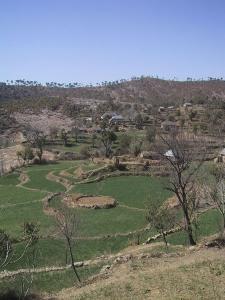 Terrance Farm Field