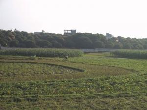 Hanoi Lychee Farm