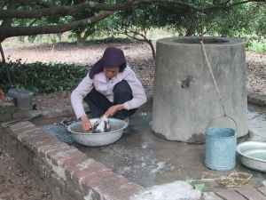 Hanoi Woman Plucking Chicken For Lunch