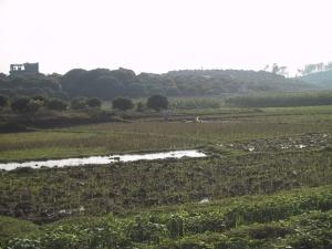 Hanoi Rice Fields