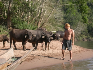 Close Encounter with Water Buffalo