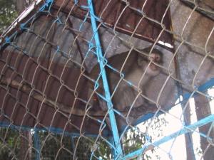 Hoi An Lemur