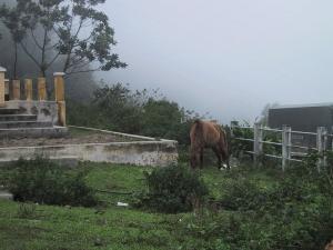 Horse in Vietnam