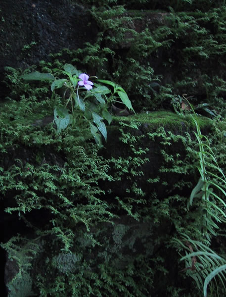 Flower Growing on Tomb