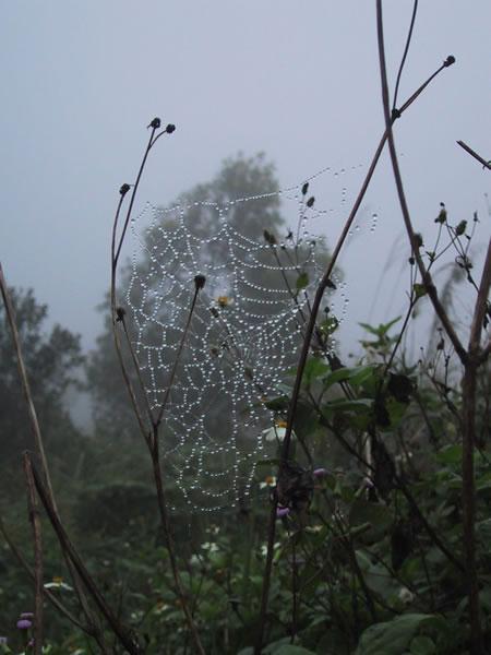 Spiderweb Outside Khe Sanh Bunker