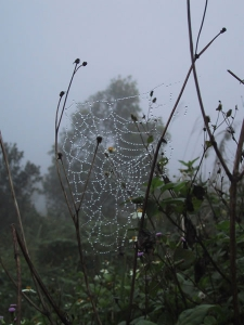 Spiderweb Outside Khe Sanh Bunker