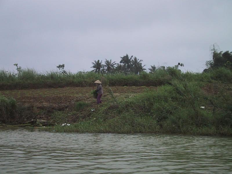 Vietnam Farm Worker