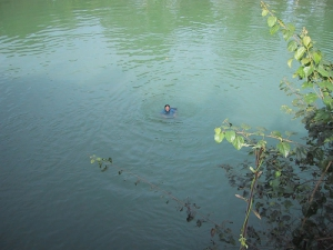 Tien Swimming