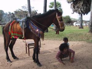 Angkor Kids Horse Rides