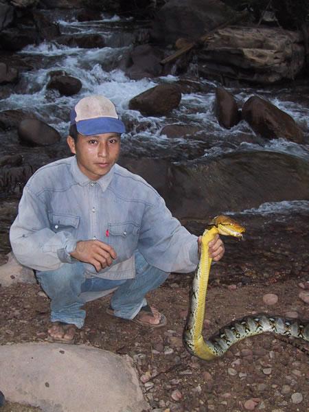 Caught 10-foot Python