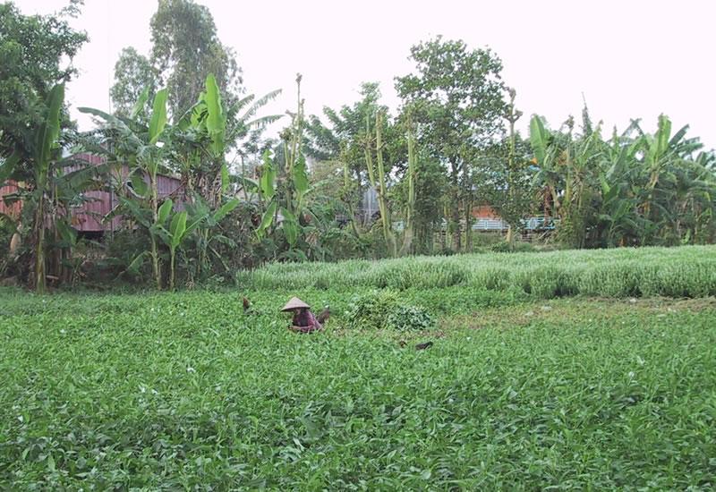 Vietname Farm