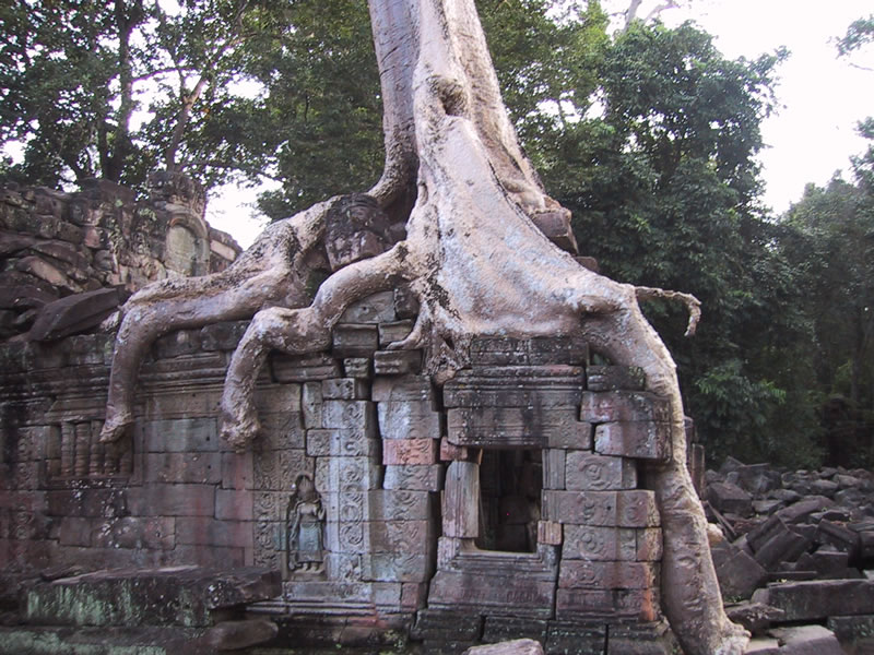 Angkor Tree Roots Splitting Bricks