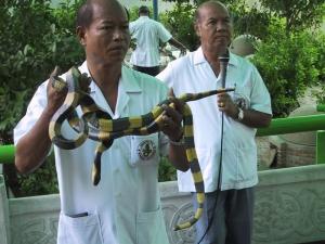 Snake Farm Blue Kraits