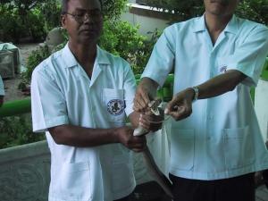 Snake Farm Milking Cobra