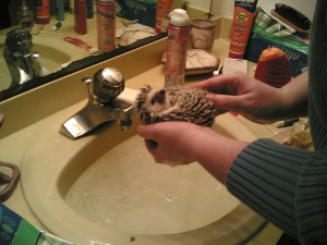Balled Hedgehog