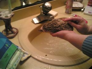 Soaping Hedgehog