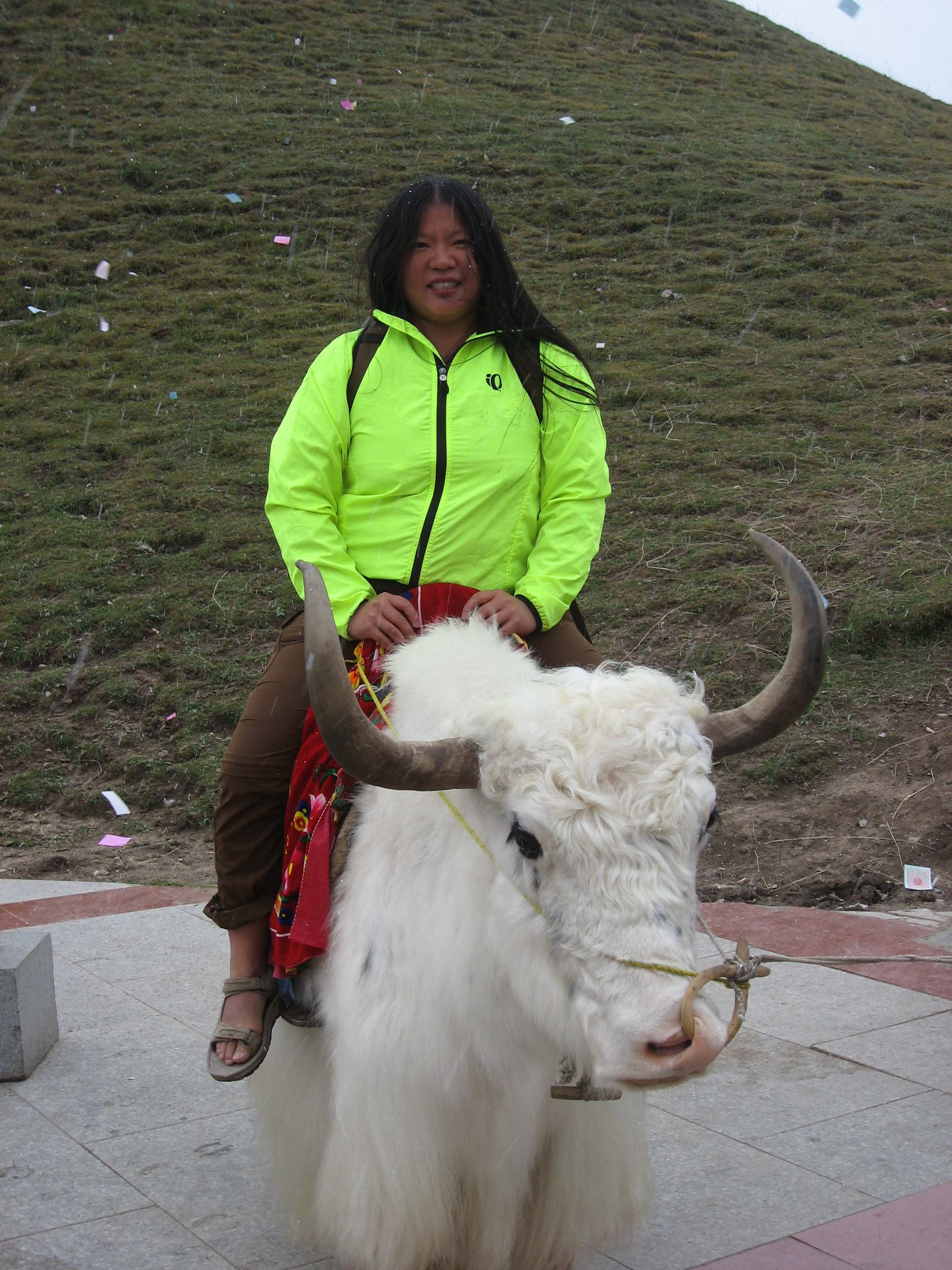 Tien on a Xining White Yak