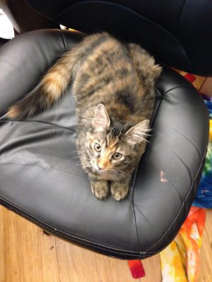 Tigress, six weeks later (11-5)