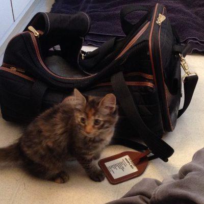 Tigress on 9-22 (adoption day!)