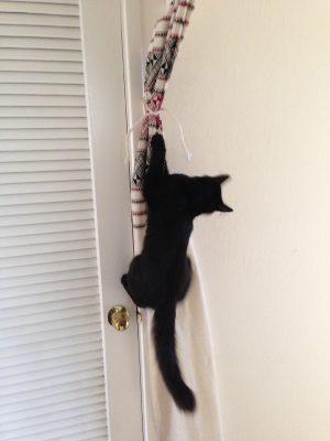 Fritz the Incredible Flying Kitten!